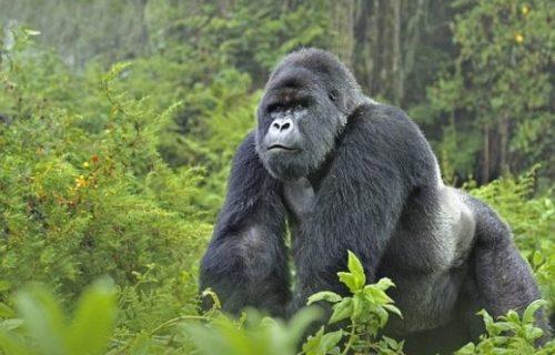 Birding & Gorilla trekking Uganda Safari 14 days