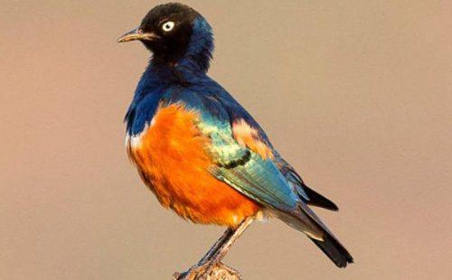 Birdlife in Mount Kenya National Park.