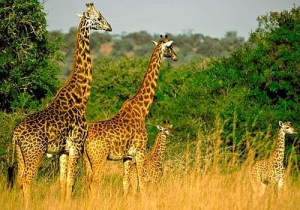 wild animals in akagera national park