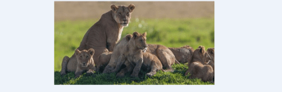 some of the best time to visit Kenya, where to tour, and weather conditions in kenya
