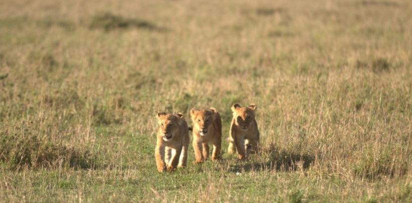 Video shooting at Maasai Mara National park