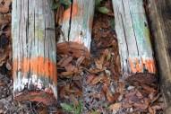 orangepoles