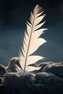 featherbeach