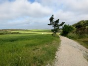 Green Grass and Blue Sky with winding trail