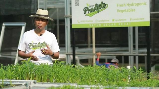 pradipto farm, sayur sehat pradipto farm, sayur organik, produsen sayur organis, sayur organik tangerang