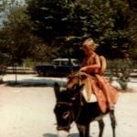 Delfi 1982 auf Esel