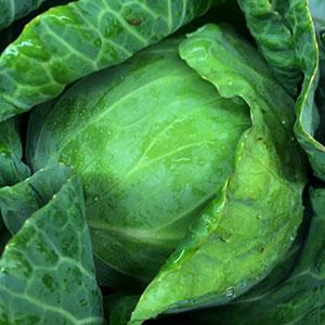 Cabbage July 15 - Nov 30