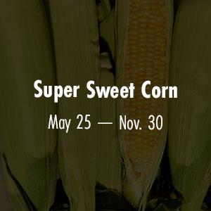 Sweet Corn May 25 - Nov 30