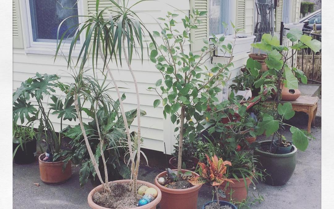 #Plantlife