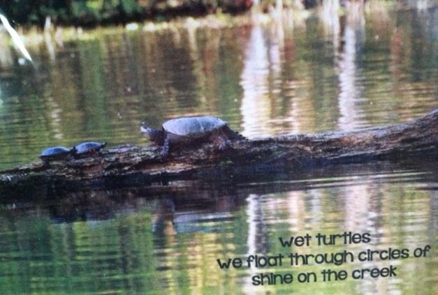 turtles_heidi