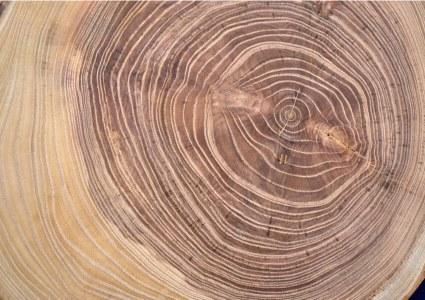 acacia wood patterns birds eyes tiger stripes natural beauty wooden furniture