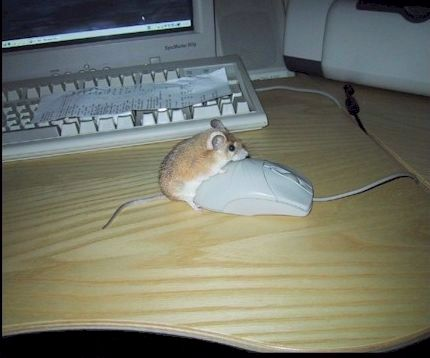 Mouse having sex with a mouse.