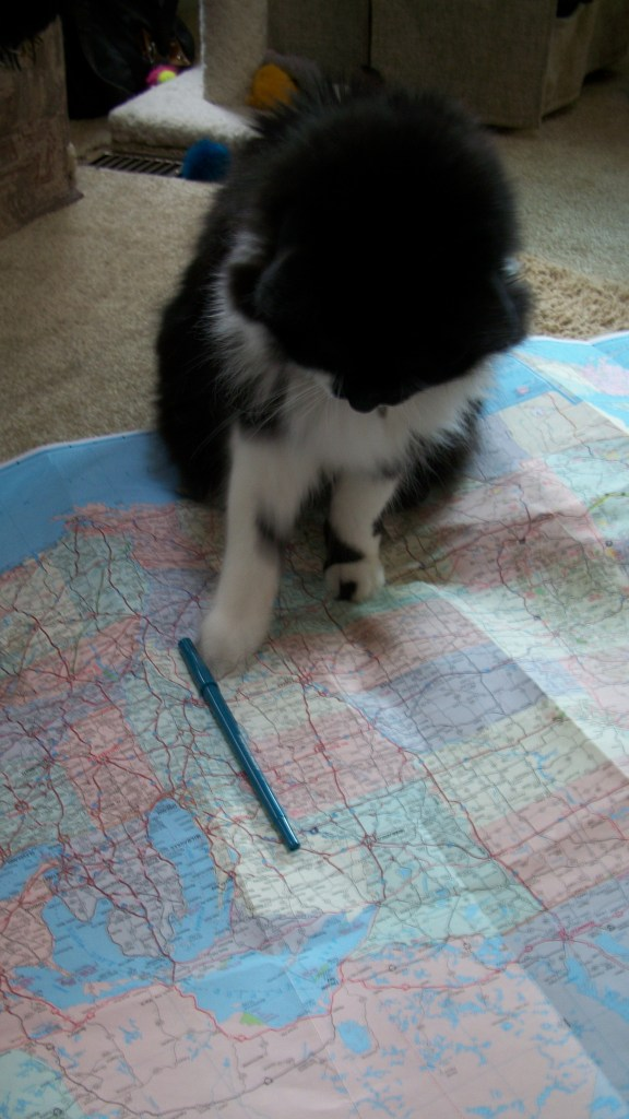 Checkers sitting on a map, playing with a pen.