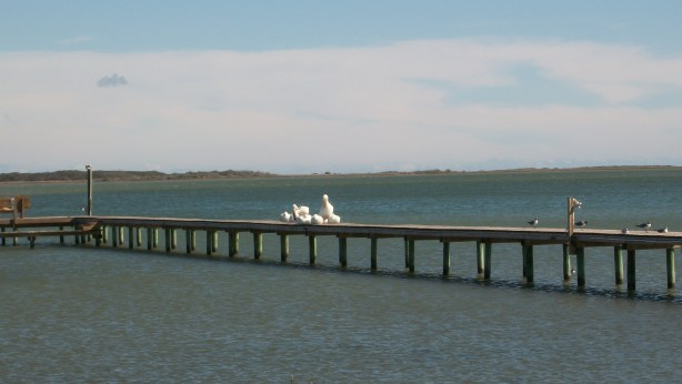 Birds on the fishing pier.