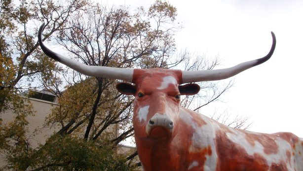 "The ""World's Largest Longhorn""?"