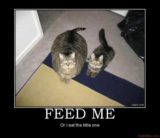 """This is why Pye has to be an """"only kitty""""."""