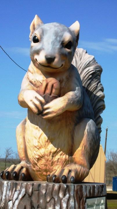 Ms. Pearl, the Giant Squirrel, Cedar Creek, Texas