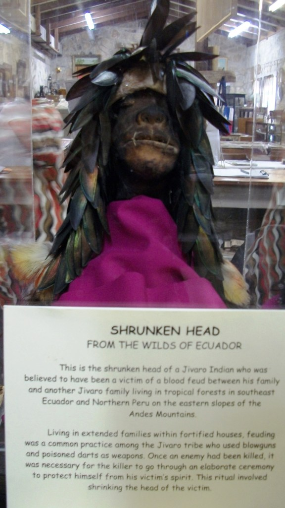 The shrunken head of a Jivaro Indian.