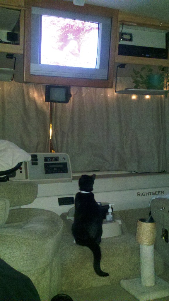 Pye watching animals on TV.