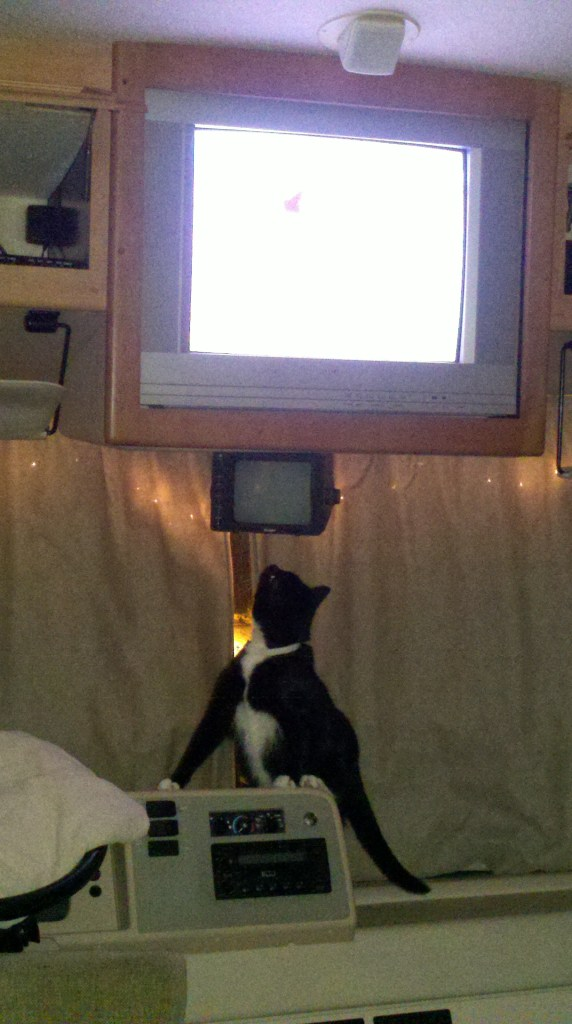 Pye trying to catch animals on screen. She's about as successful at hunting in real life.