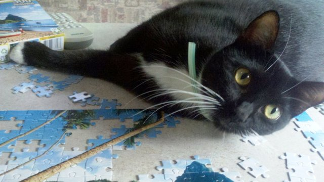 Pye likes puzzles. But in a different way.