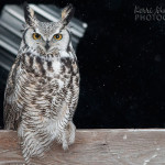 Wildlife photography 2013 – my year in review (part eleven)