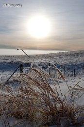 Alberta Winter 2