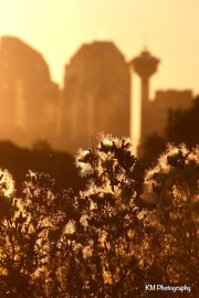 Calgary Sunset