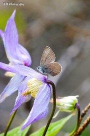 Purple Flower Butterfly