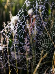 Spider Web Rainbow Dew