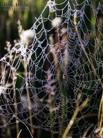 Spider Web Rainbow Dew