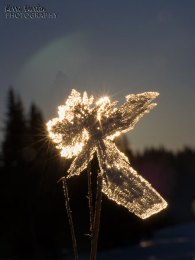 Snow flake crystal