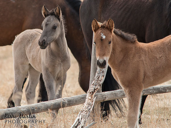 WildFoals