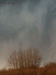 Stormy Sky Trees
