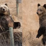 From a little brown bat to wrestling grizzly bears, it's been a season of remarkable manifestations