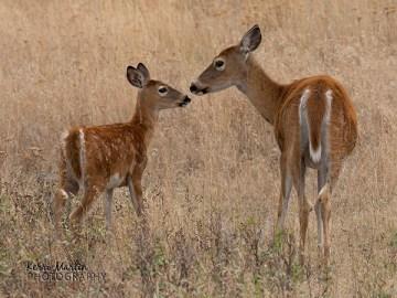 Deer Mom and Faun