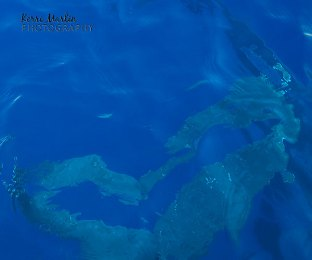 Humpback Whale Tail Heart - Underwater