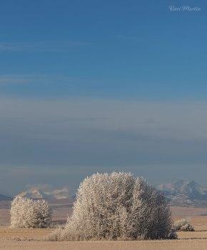 Frosty Senntinals