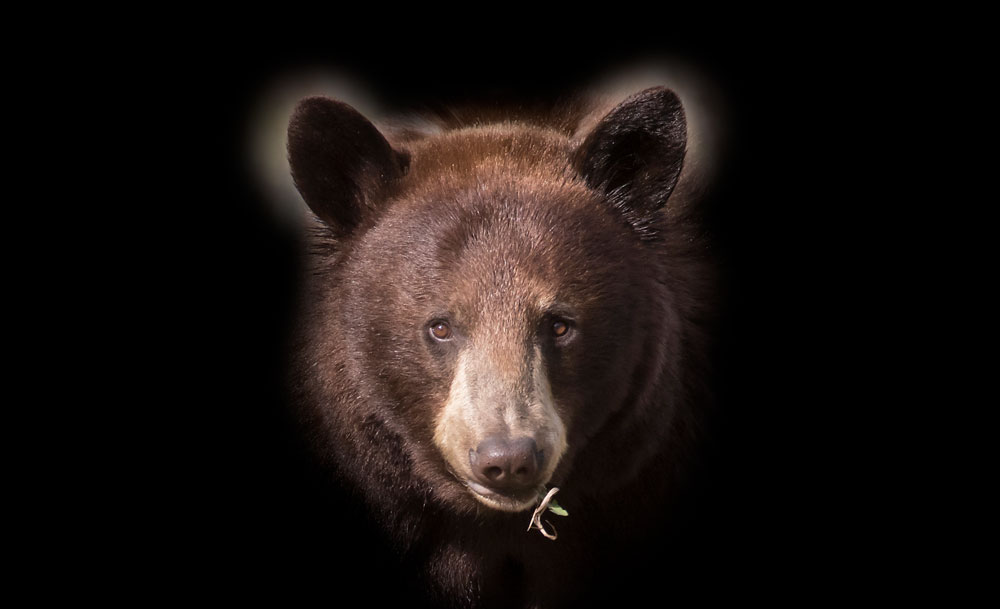 Close encounters of the bear kind = manifestation of my wildest dreams (Part 2 of 3)