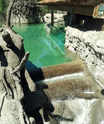 Detroit Zoo Beaver Exhibit Waterfall
