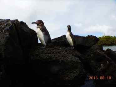 Hola Penguins!