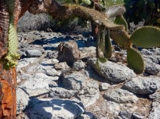 Spot the Iguana