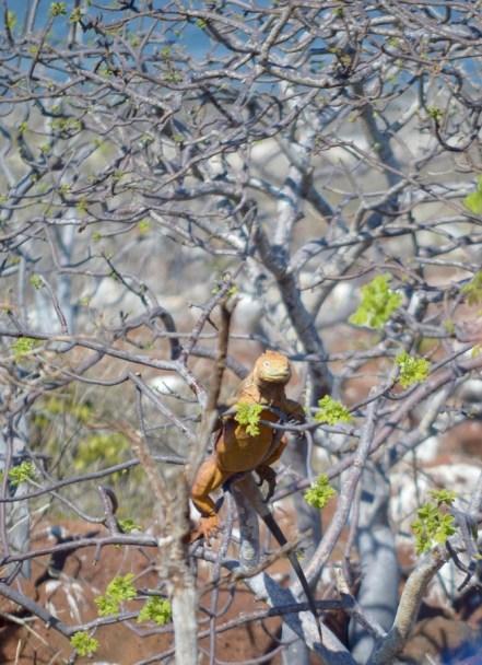 Climbing for a Morsel
