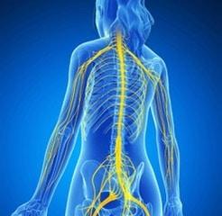 Nerves of the Body kerrykeegan.com