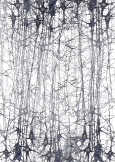 Neurons - abstract