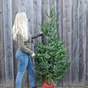 Servische spar picea omorika kerstboom met kluit kopen nijmegen bezorgen