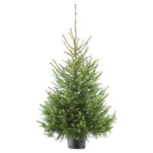 Servische spar online kopen kerstboombezorging.nl