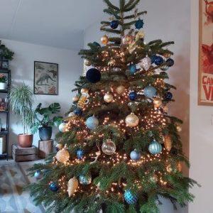 Kerstboombezorging.nl Nordmann met kluit kopen bestellen bezorgen nijmegen