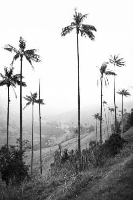 Salento-Valle del Cocora Colombia Southamerica_Travel_Kerstin Musl_23