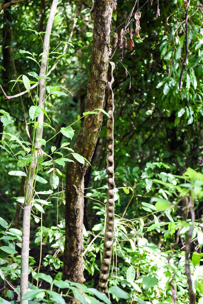 Tayrona Santa Marta Colombia Southamerica_Travel_Kerstin Musl_03